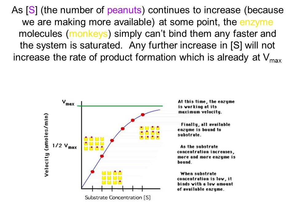 As [S] (the number of peanuts) continues to increase (because we are making more available) at some point, the enzyme molecules (monkeys) simply can't bind them any faster and the system is saturated.